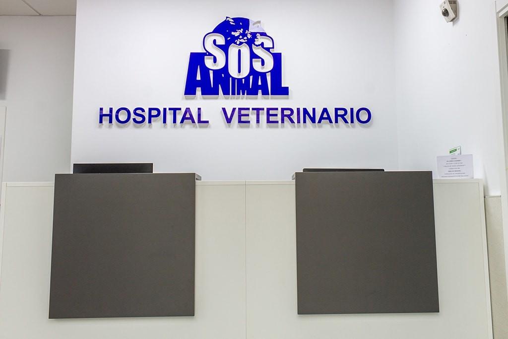 Recepción Hospital Veterinario